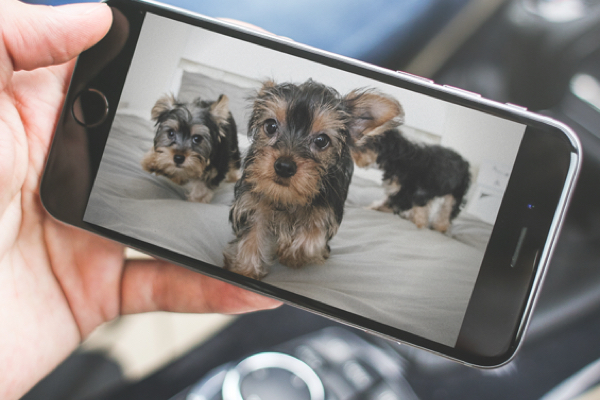 videocamera notturna per cani