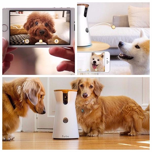 Furbo: la videocamera per cani e lancia croccantini da remoto, la distanza non è più un problema!